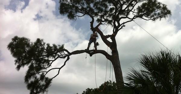 Treeman_ss